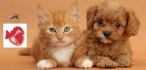 dogs vs cats - heartworms