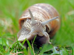 Snails, Slugs, And Frogs..Watch Out For These Critters In Your Garden!