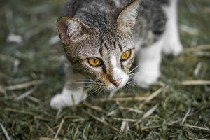 Why Letting Your Cat Hunt is A Huge No-No