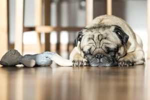 Unclean Dog Toys Can Bring Parasites into Your Home