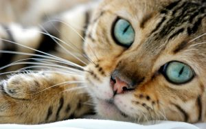 Does Your Cat Have A Stomach Worm Infection?
