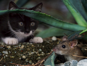 Top 5 Ways Cats Get Parasitic Worms: Your Cat Could Be at Risk!