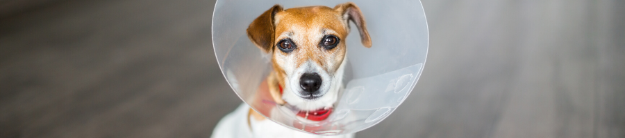 The What, Who, When, Why, and How of Deworming Dogs