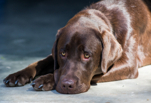 Parasitic Worms in Dogs: The Dangers of Raw Fish