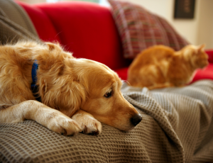 5 Common Myths About Worms in Pets